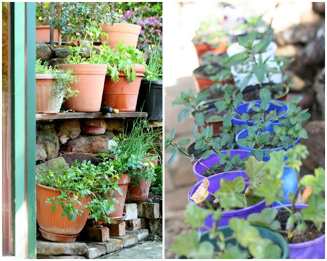 Growing herbs in pots and planters for easy use