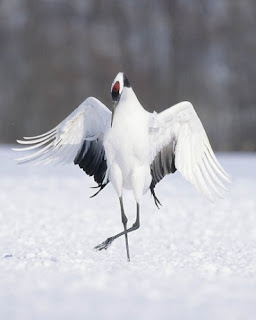 What a look Nice Bird Pics