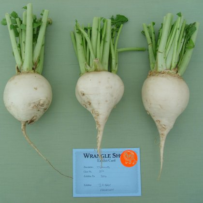 prize winning turnips at wrangle show