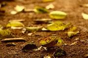 Curiosidades: Qual a Origem do Cheiro de Terra Molhada?