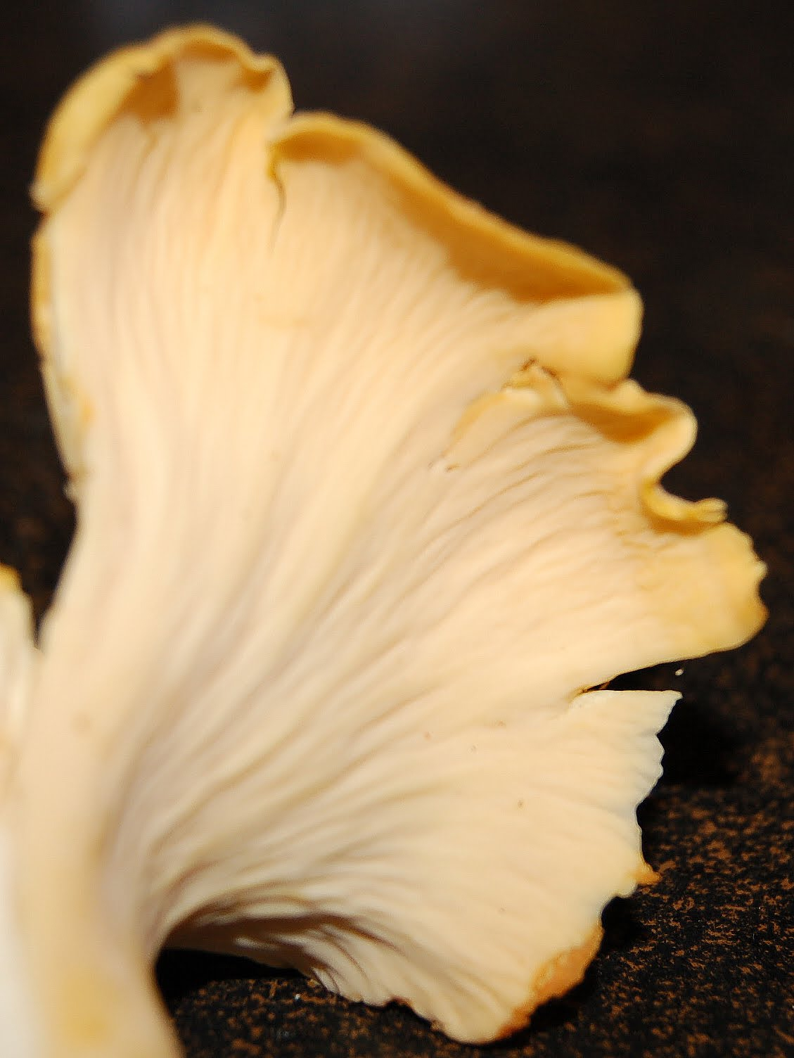 Chanterelle mushrooms, white, oyster mushrooms - step by step cooking recipes 82