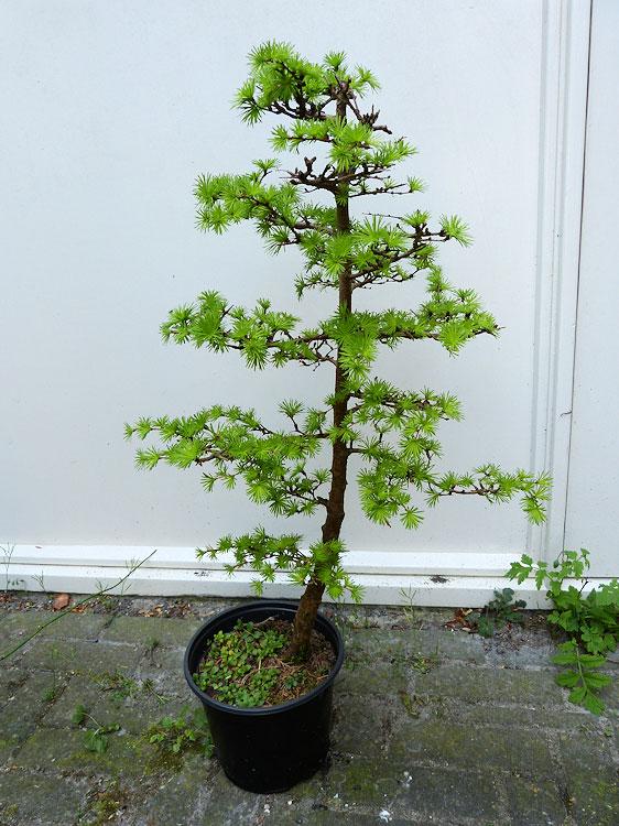 Bloempot boom potplanten buiten schaduw - Buiten muur kraan decoratieve ...