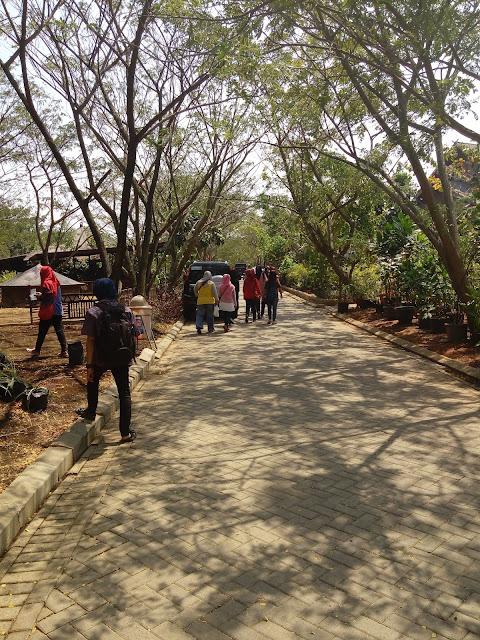 wisata mangrove pik