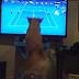 Το γκόλντεν ριτρίβερ που λατρεύει το τέννις...