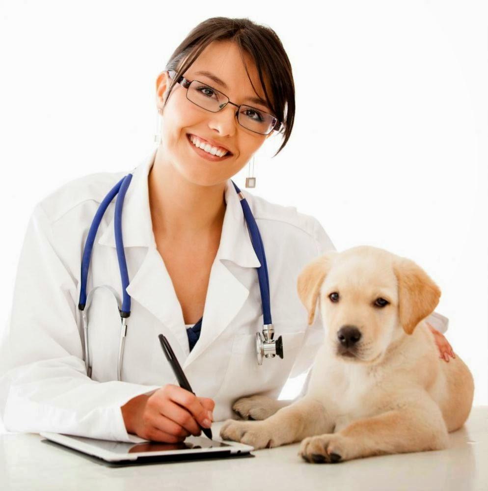 картинки ветеринар профессия