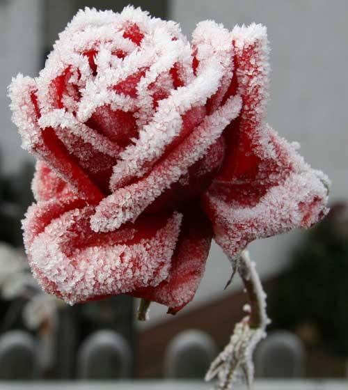 Χιονισμένο
