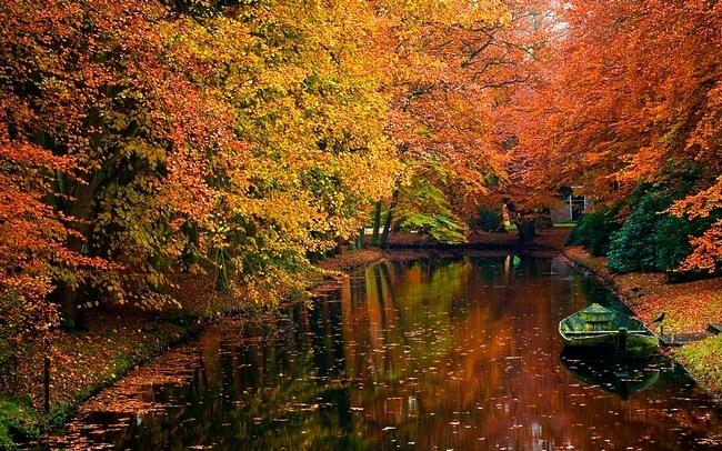 ... Y caen las hojas, llega ....¡¡¡ EL Otoño !!! - Página 9 Lunes+12+de+noviembre+(5)
