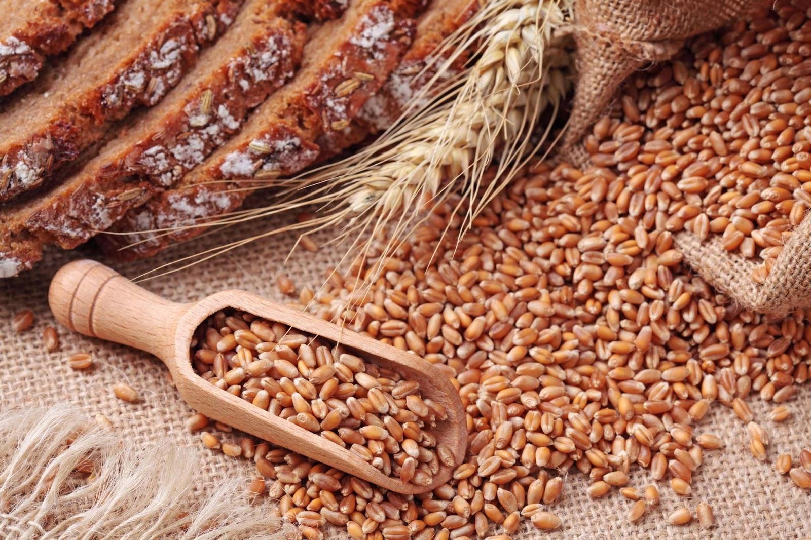 الحبوب أصل التغذية عند الإنسان والاقتصار على القمح خطأ علمي