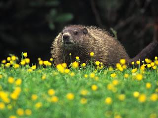 ملف كامل عن اجمل واروع الصور للحيوانات  المفترسة   حيوانات الغابة  38