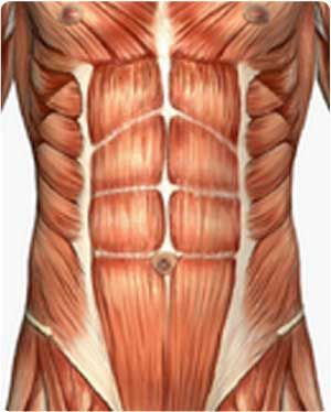 The Abdominal Rules ! -