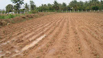 Land Treatment Before Stevia Cultivation