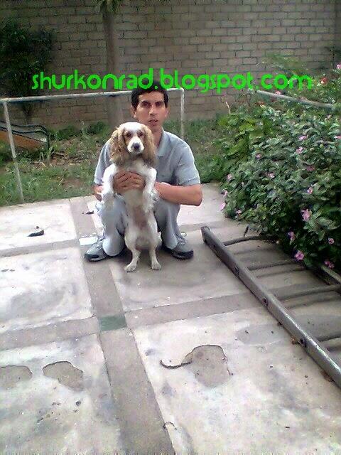 ShurKonrad perro silla ruedas dog blogger