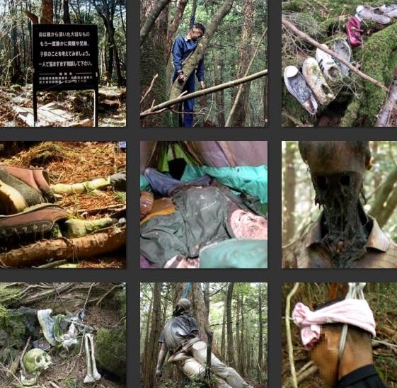 suicidas da floresta aokigahara