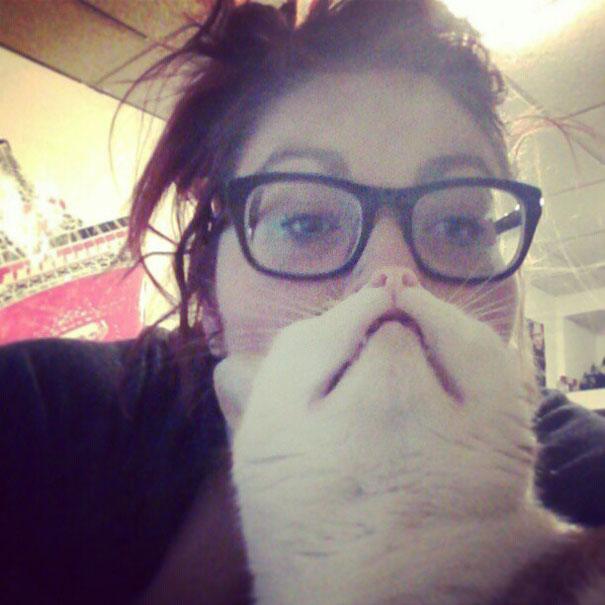 Cat beards internet craze goes viral