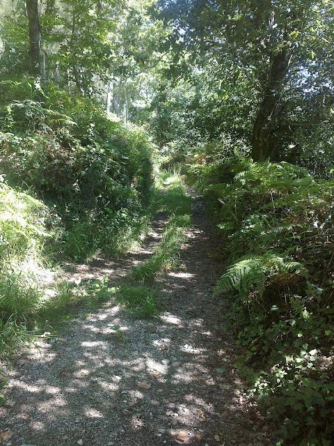 Camino en vilaboa ruta de senderismo san lois