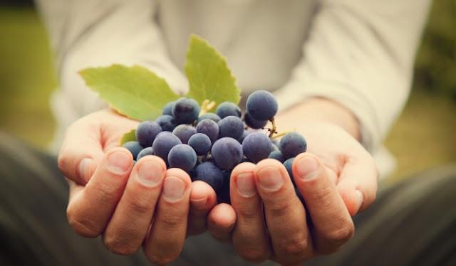 5 Manfaat Buah Anggur Untuk Kesehatan Tubuh Dan Kulit Wajah