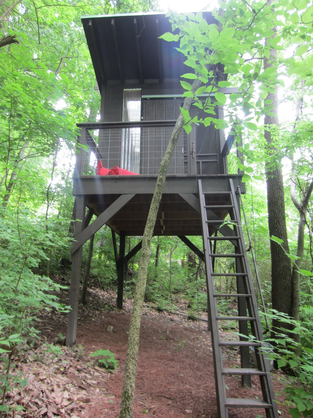 a modern tree house tiny stilt house in