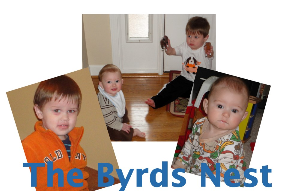 The Byrds Nest