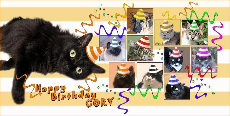 Cory Cat Blog