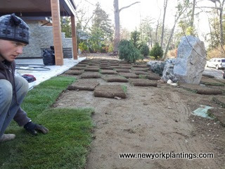 Gardener/Landscaper laying sods