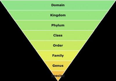 Tingkatan Takson Dalam Klasifikasi Definisi Pengertian Secara Umum Adalah