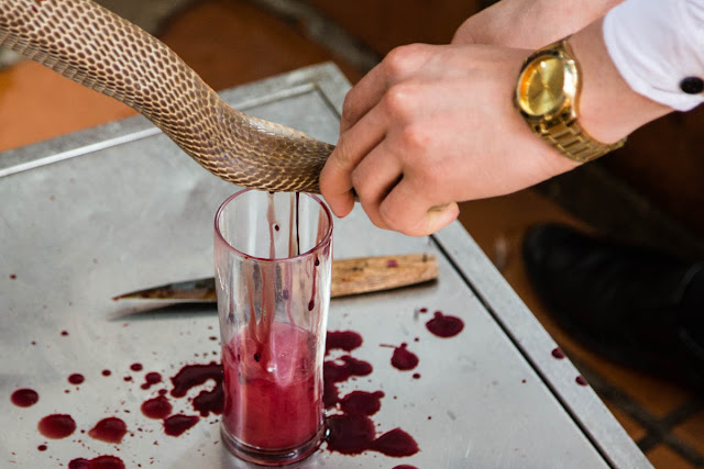 Tourists Drink Snake Blood and Vodka in Vietnam Gross!
