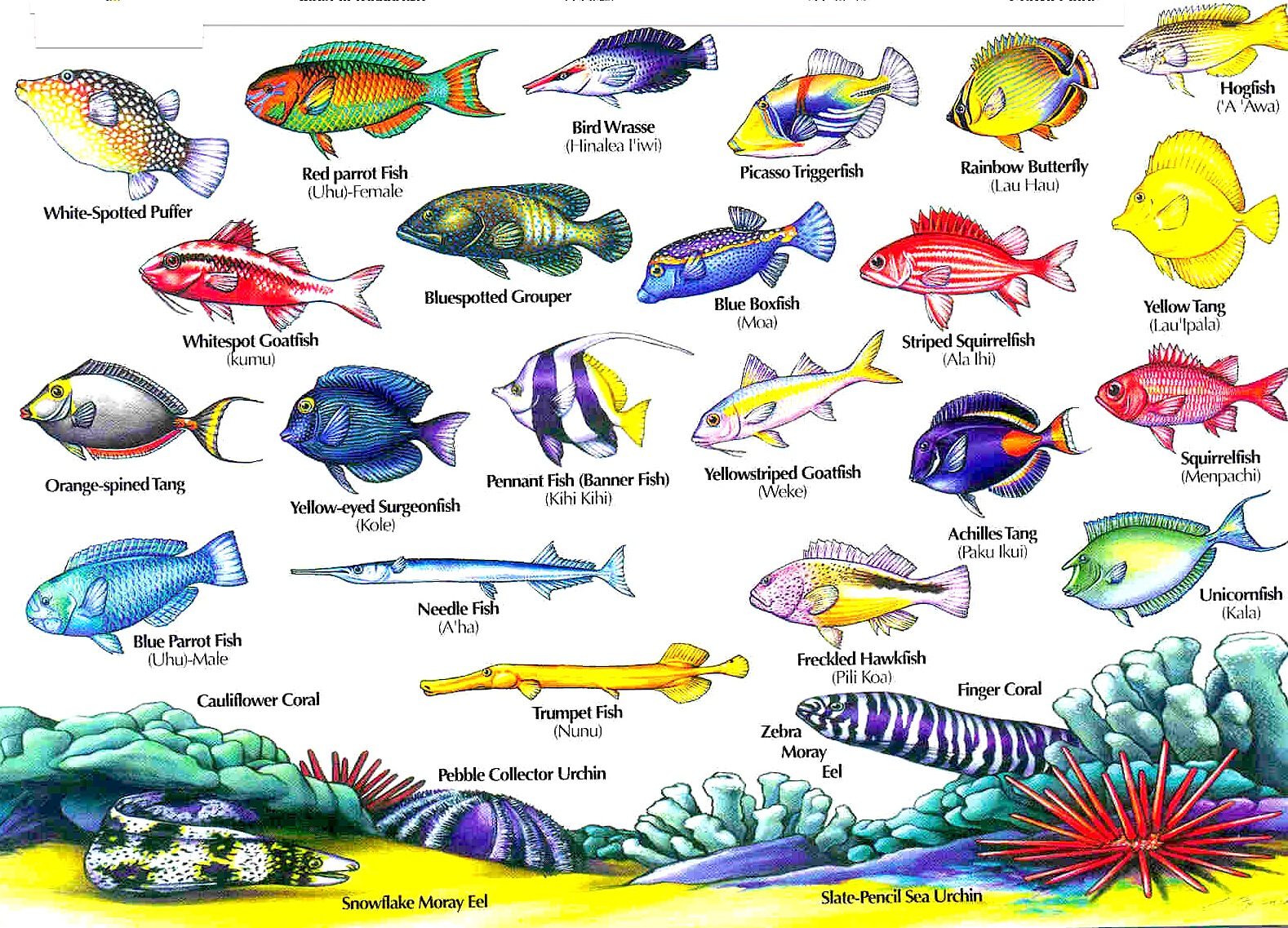 Fish aquarium guide - Big Island Hawaii Reef Fish Pictures