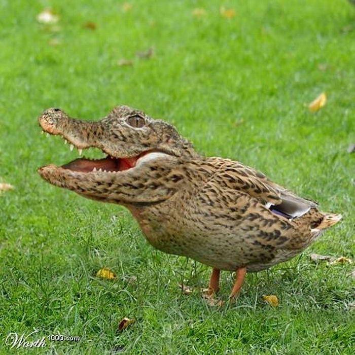 Top World News Funny Hybrids Animals