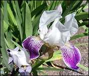 June Flowers Steelhead Park