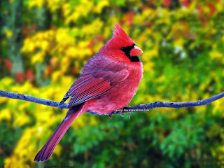 Beautiful Birds Wallpapers - Desktop Wallpapers