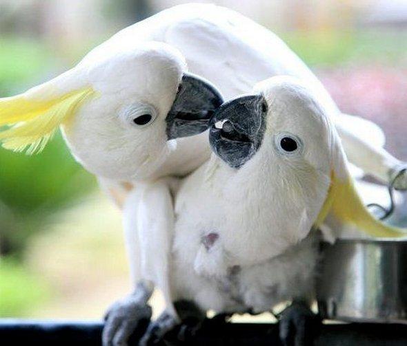 http://4.bp.blogspot.com/-H7VV1vNsLKg/TnN8sce340I/AAAAAAAABM4/OH9_LiIf5CU/s1600/Funny+Animals+Kissing-1.jpg