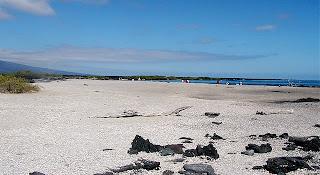 Punta Espinosa, Fernandina, Galapagos