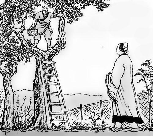 สุมาเต็กโชขึ้นต้นไม้คุยกับบังทอง