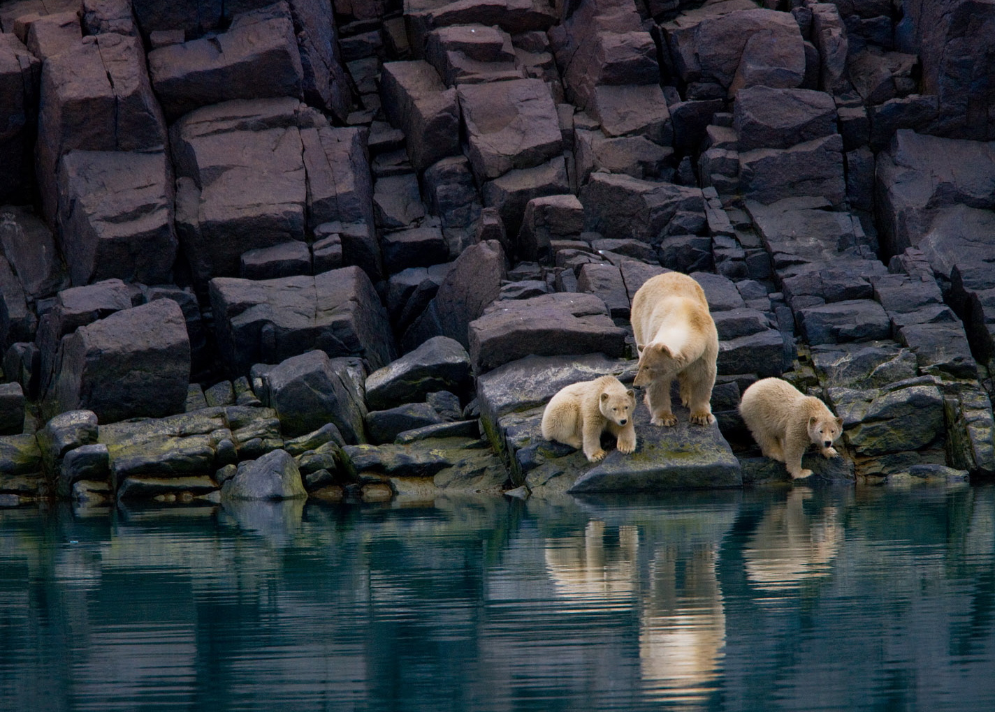 http://4.bp.blogspot.com/-H82kndAXFEI/TymwFPi4WwI/AAAAAAAAIg8/BoFzXBU5EE8/s1600/polar-bear-cubs-svalbard-norway-national-geographic-wallpaper.jpg