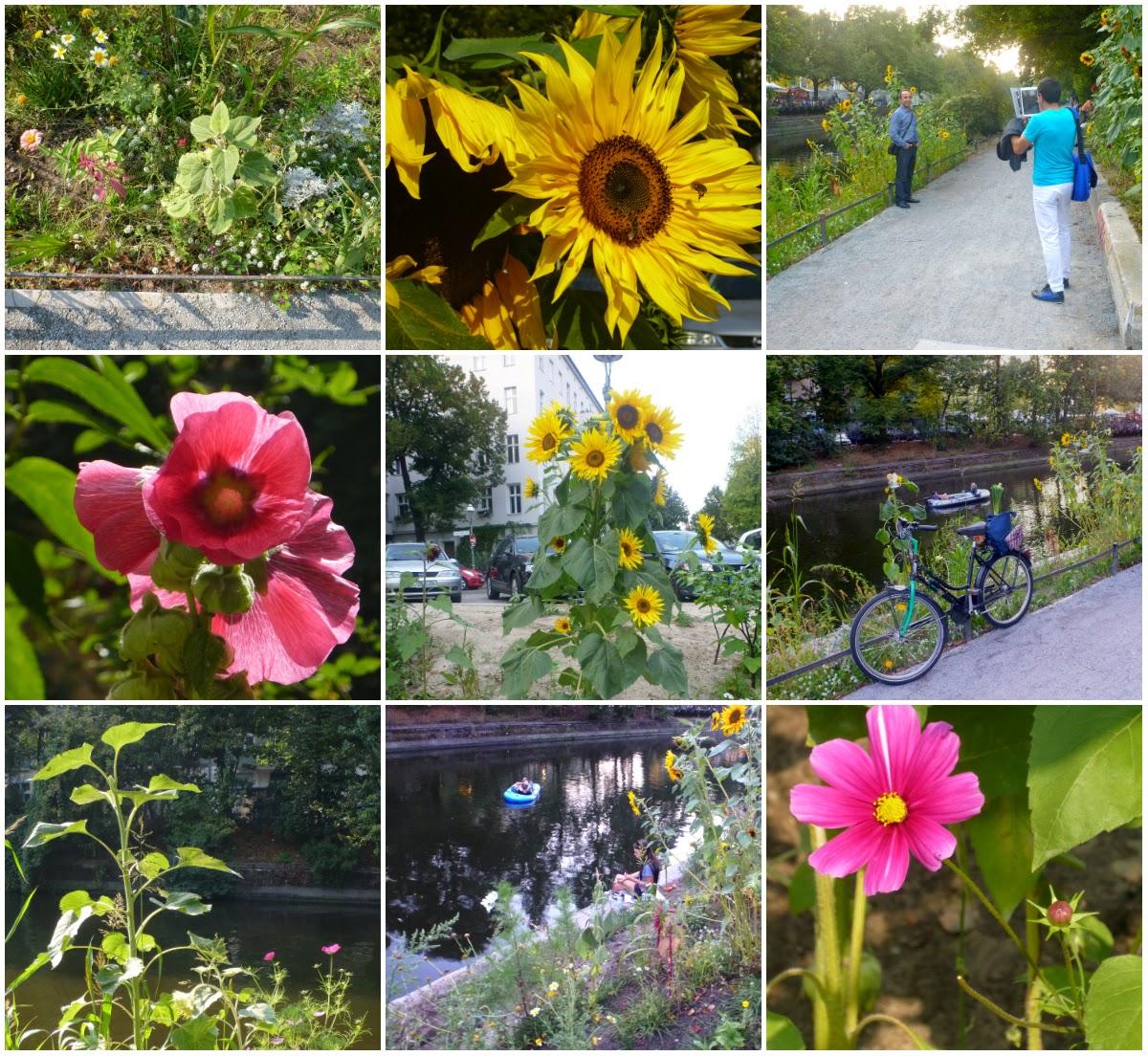 Cosmeen, Anemonen, Sonnenblumen, Paddler auf dem Kanal, fotografierende Menschen, Bienen, die Blumen anfliegen usw.