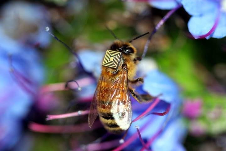 Conheça as abelhas cibernéticas que poderão salvar o planeta