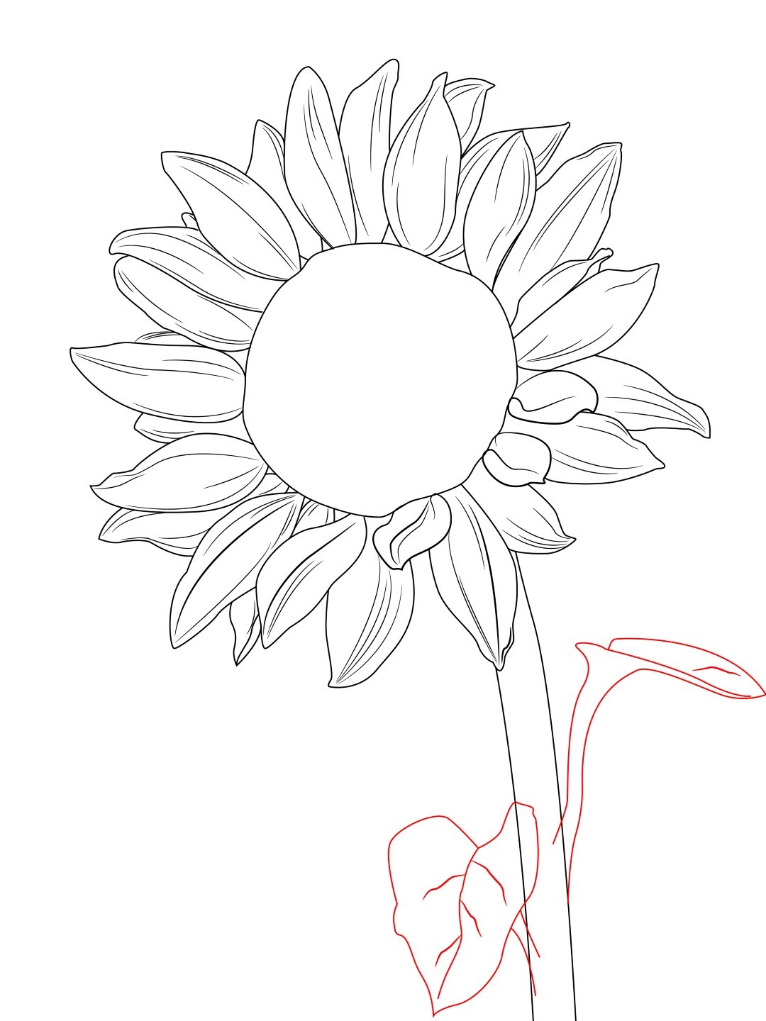 how to draw a sunflower draw central