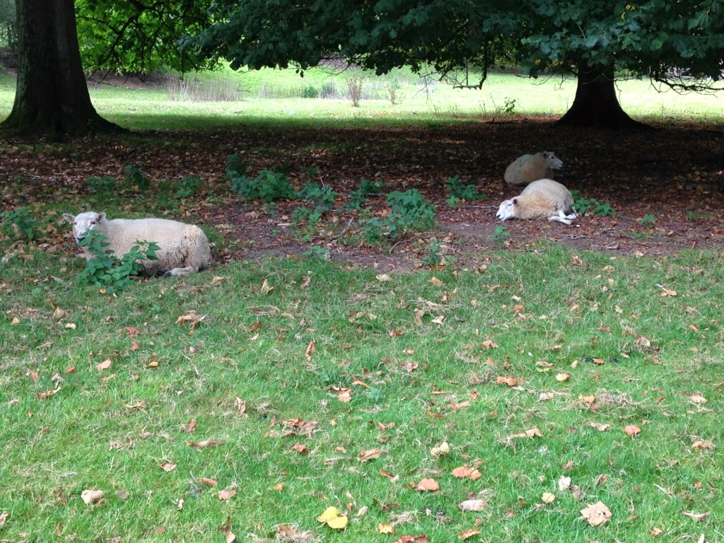 Hinton Ampner sheep