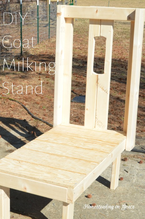 how to build a pygmy goat milking stand