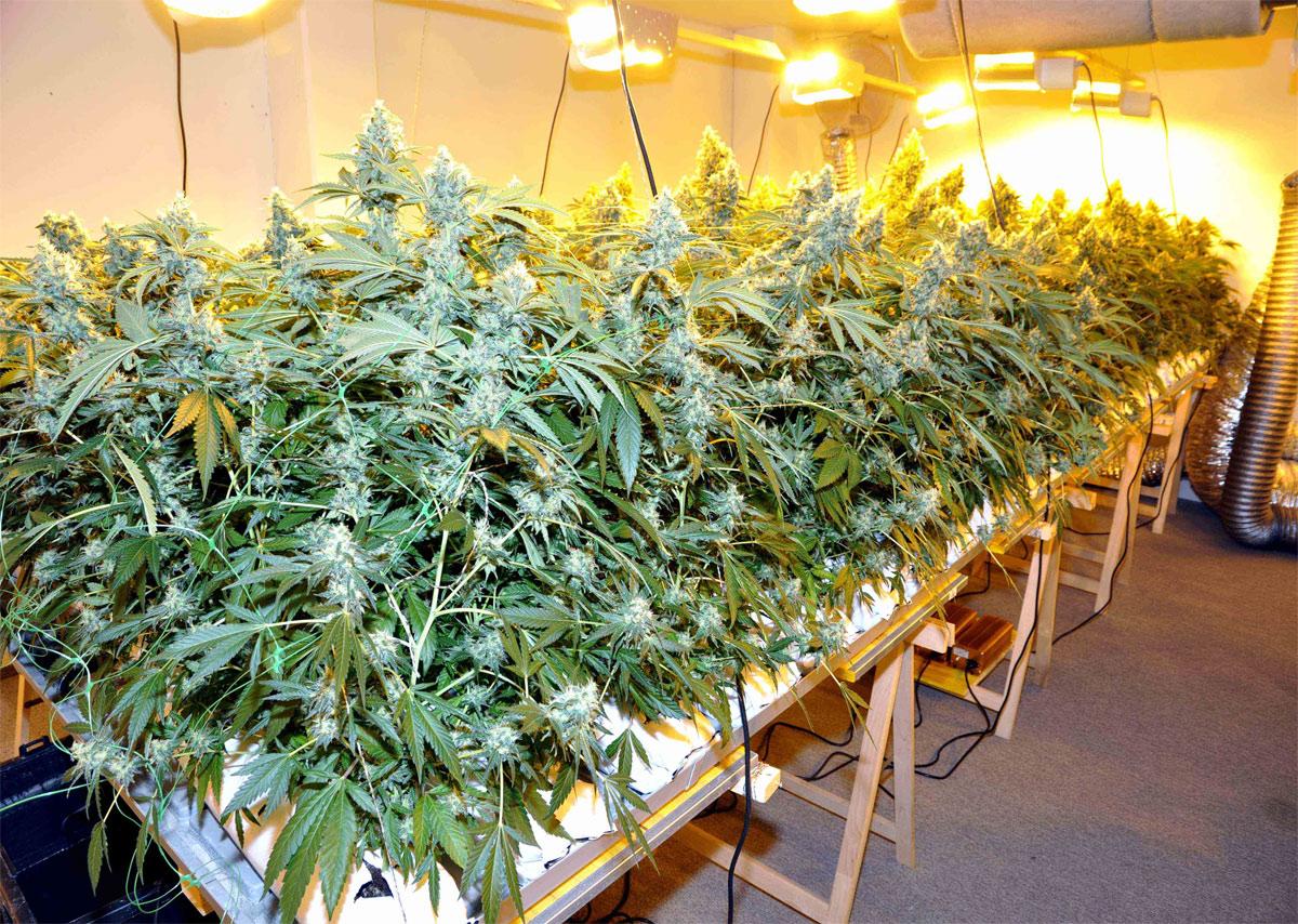 schaffhausen schaffhauser polizei r umt indoor anlage 2100 pflanzen. Black Bedroom Furniture Sets. Home Design Ideas
