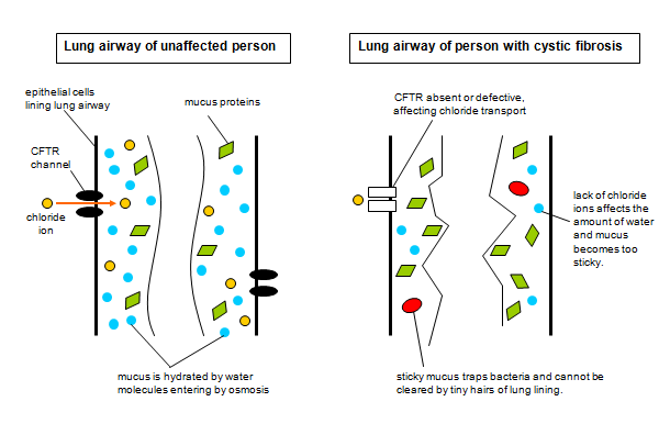 an overview of the cystic fibrosis gene Confirmation of a clinical diagnosis of cystic fibrosis  risk refinement via carrier screening for individuals in the general population  prenatal diagnosis or familial mutation testing when the familial mutations are included in the 106-mutation panel listed above (if familial mutations are not included in the 106-mutation panel, order fmtt / familial mutation, targeted testing.