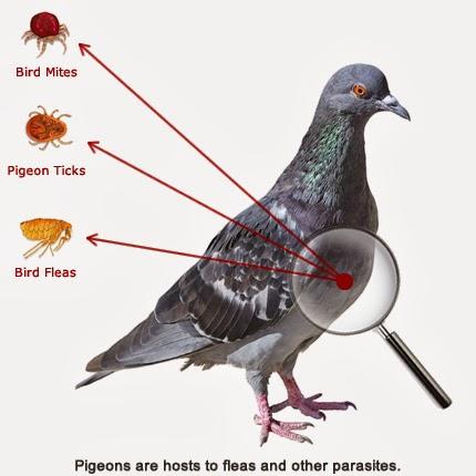 Pigeons Palace | Your Blog Description