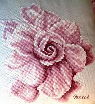 Flor de mayo