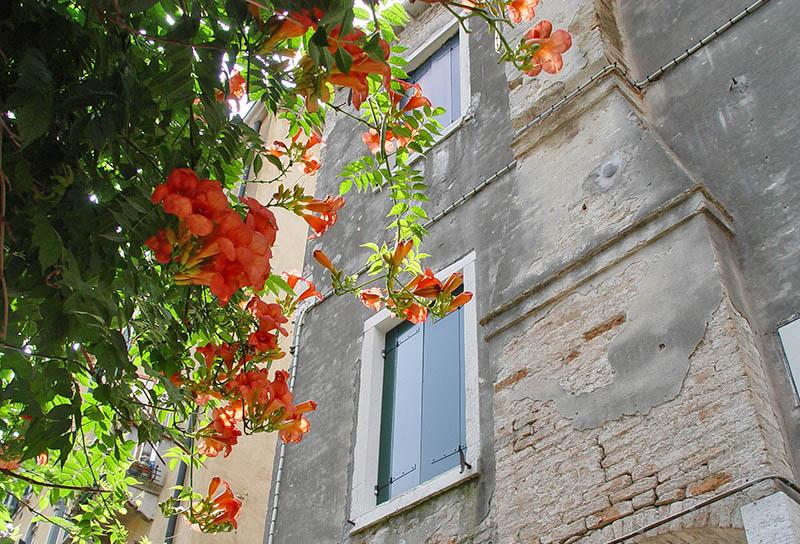 flowers venice