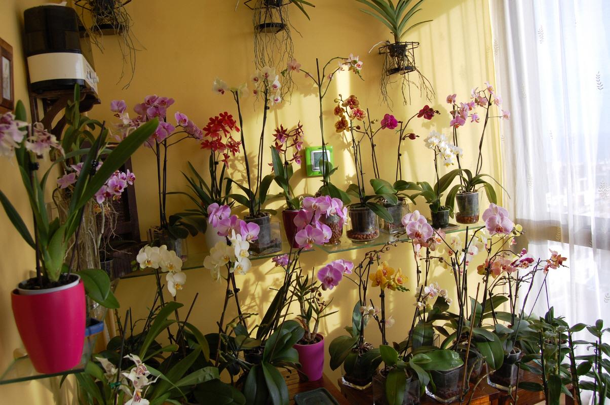 La naturaleza entre nosotros las orqu deas - Tiestos para orquideas ...