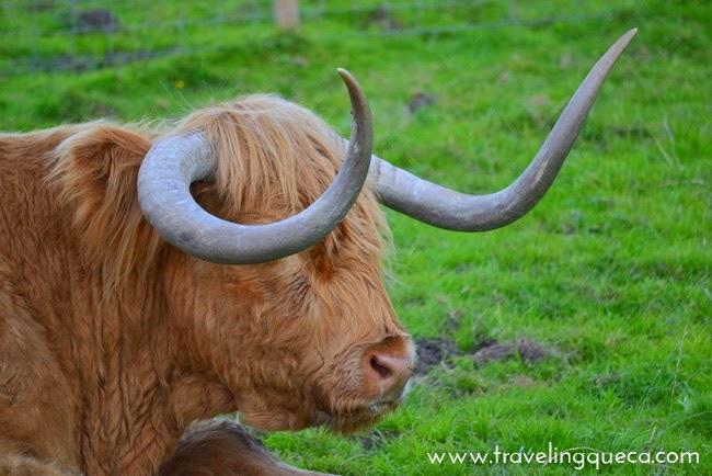 Viajar a Escocia