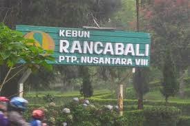 Perkebunan Teh Rancabali
