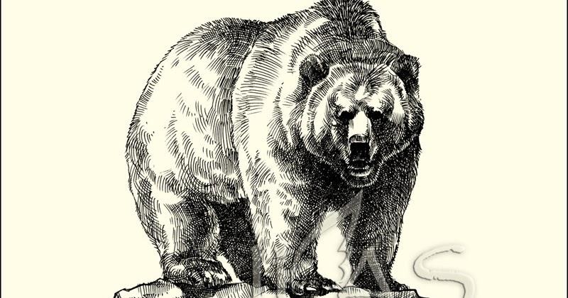 Dessin de l ours brun grizzli - Dessin de grizzly ...
