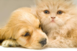 What To Choose Dogs or Cats ?