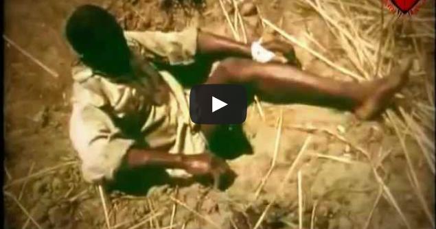 Cip Shock - Câu Trăn bằng chân người